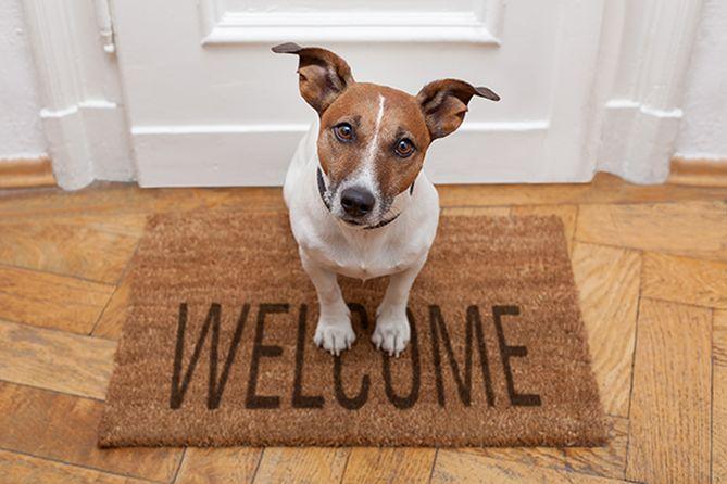 pallaisson-bienvenue-immobilier-chien